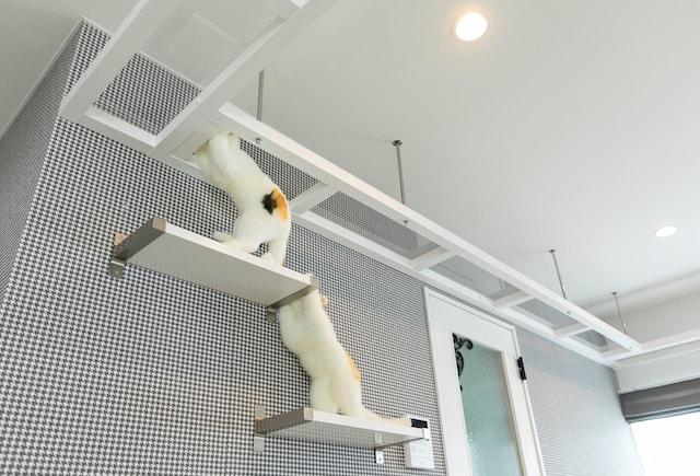 壁には猫が登れるキャットステップ付き by necofino(ネコフィーノ)