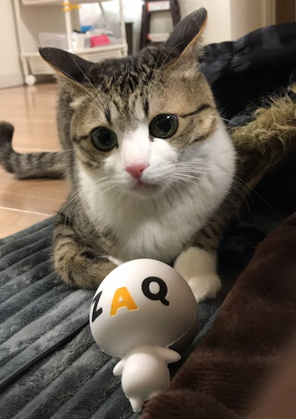 人気のキジ白猫「すずめちゃん」のインタビュー by jcomテレビ