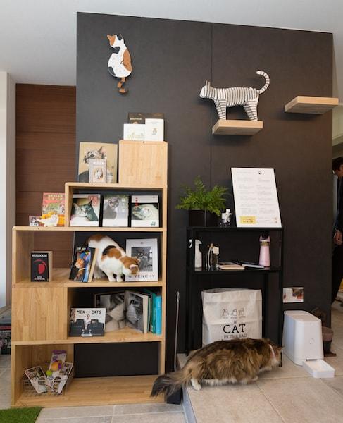 skye~スカイエ~幕張展示場の本棚には猫本が陳列