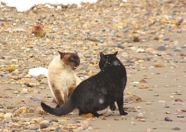 今にも喧嘩が始まりそうな2匹の野良猫