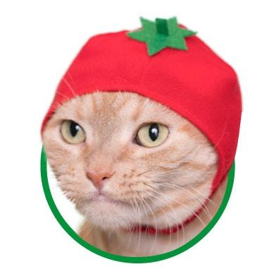 猫用が身に着ける「野菜」のかぶりもの、トマト