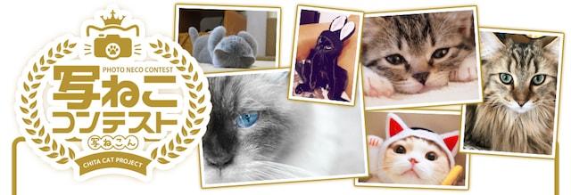 ねこフェスタの猫フォトコンテスト「写ねこコンテスト 」