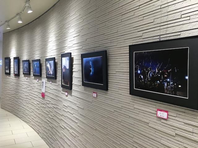 東京猫色のネコ写真展 展示風景