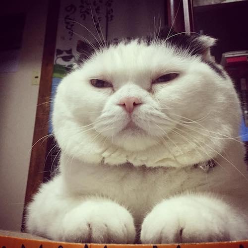 SNSで人気のぽっちゃり猫