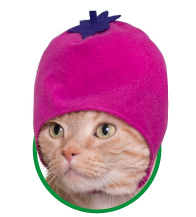 猫用が身に着ける「野菜」のかぶりもの、なす