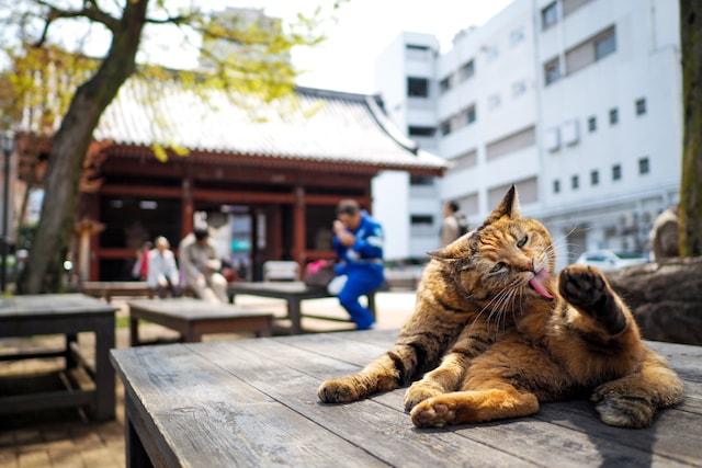 東京猫色のネコ写真作品