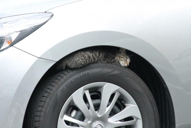 車のタイヤの上で眠る猫