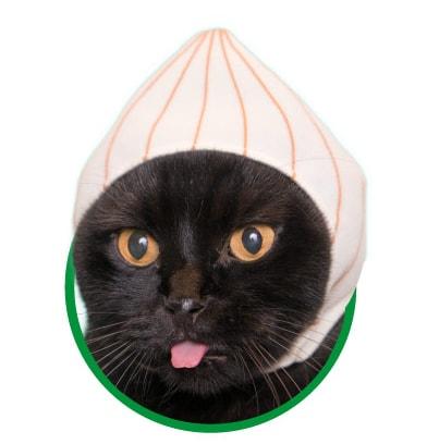 猫用が身に着ける「野菜」のかぶりもの、たまねぎ
