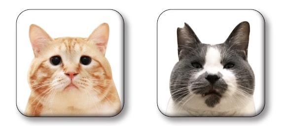 コラボ缶バッジ by 人気猫ぐっぴー&くまおのコラボグッズ
