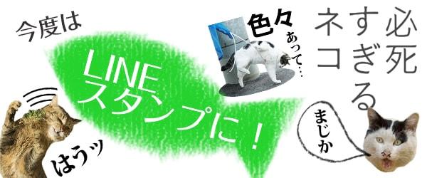 沖昌之さんの猫写真LINEスタンプ「必死すぎるネコ」