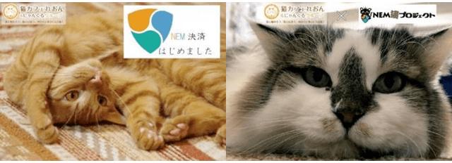 猫カフェれおん&にゃんくるグループが仮想通貨「NEM(ネム)」の支払いに対応