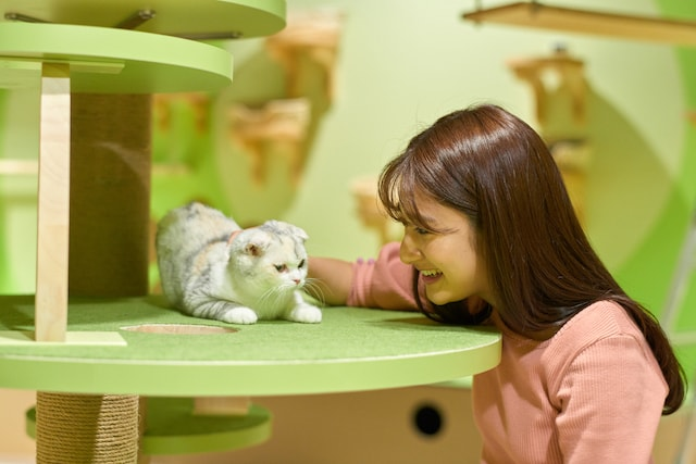 Orbi Yokohama(オービィ横浜)で猫と触れ合う女性