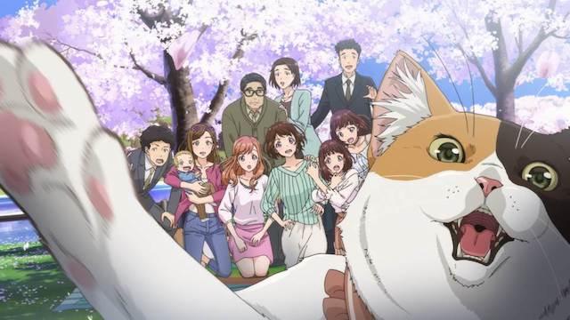「猫がくれたまぁるいしあわせ」の新作映像カット