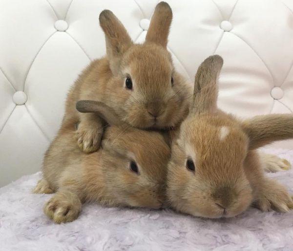 屋内動物園Animo(アニモ)のウサギ3匹