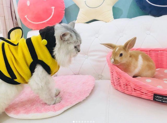 猫とウサギの仲良しシーンが見られるかもしれない屋内動物園Animo(アニモ)