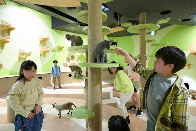 Orbi Yokohama(オービィ横浜)の猫と触れ合えるコーナー、キャットパラダイス