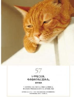 田中角栄の名言とネコの写真