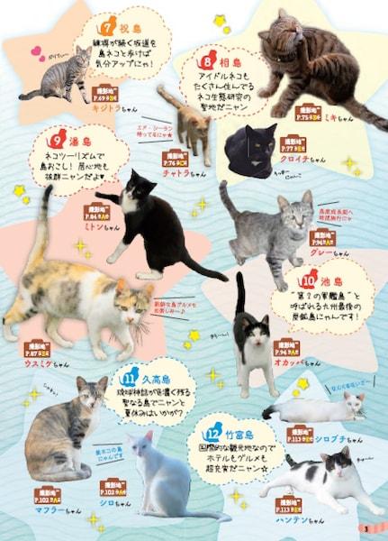 猫島で人気のご当地ネコ写真「島旅 ねこ」