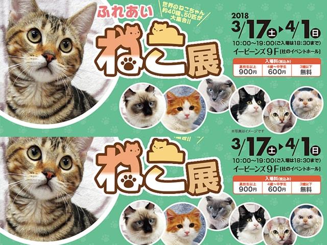 世界中の珍しい猫と触れ合える「ふれあいねこ展」仙台 EBeanSで開催