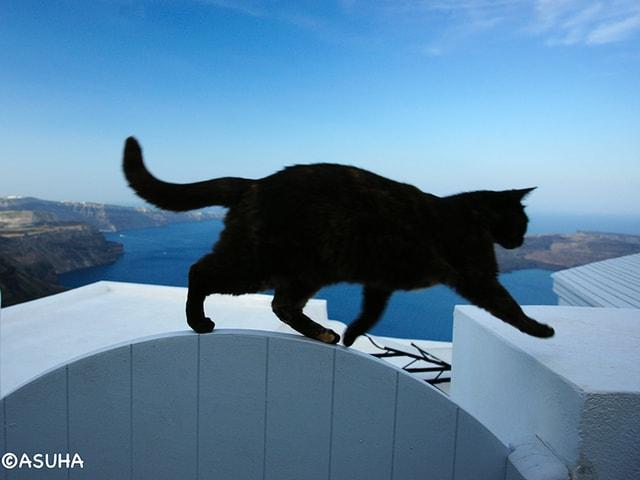 ギリシャ・サントリーニ島で出逢ったイヌネコの写真展が3/14から開催