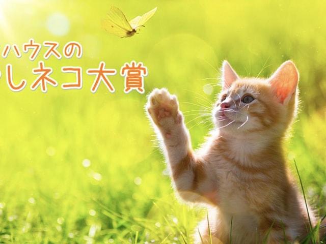 賞金10万円の猫フォトコンテスト、第3回いやしネコ大賞