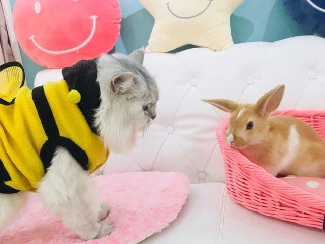 猫やウサギが暮らす屋内型の動物園「アニモ(Animo)」が大阪に誕生