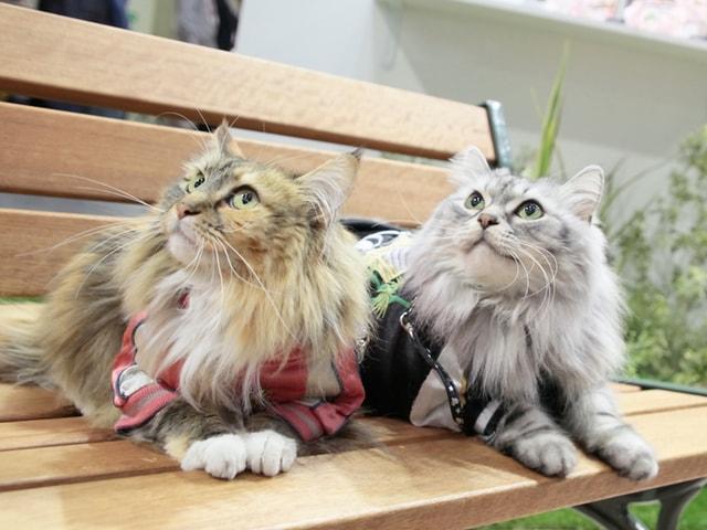 猫も入場できる日本最大級のペットイベント「第8回インターペット」