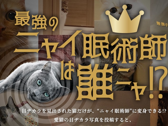 目ヂカラのある猫「最強のニャイ眠術師」を選ぶキャンペーンが本日開始