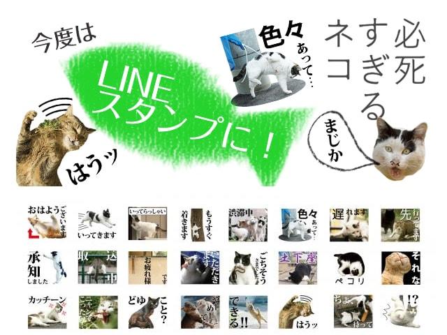 沖昌之さんの「必死すぎるネコ」がLINEスタンプになって登場したニャ