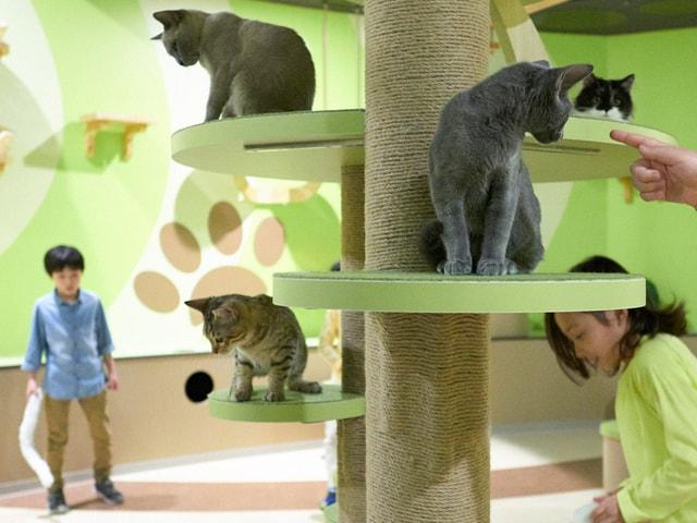 体験型ミュージアム・オービィ横浜に猫と触れ合えるキャットパラダイスが登場