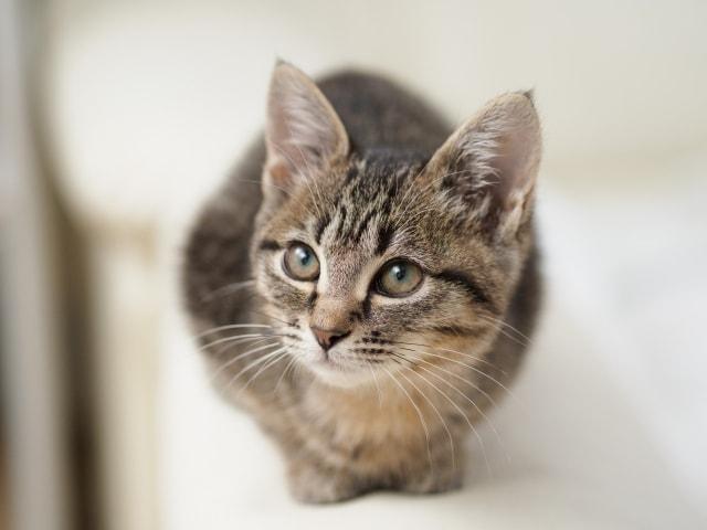愛猫のイメージ写真