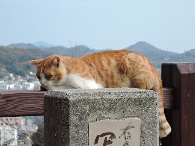 尾道の猫のイメージ写真