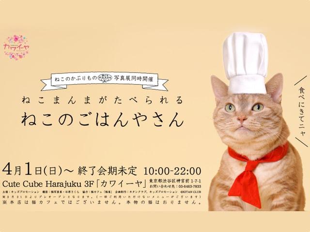 猫のかぶりもの×コラボカフェ「ねこのごはんやさん」が誕生!ねこまんまも食べれるニャ