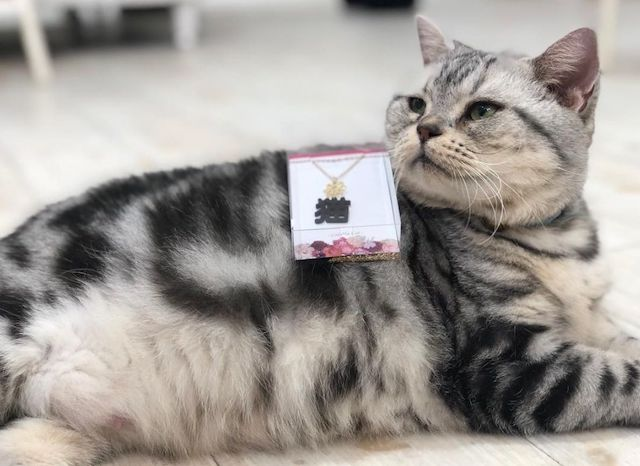 Animo(アニモ)の猫スタッフ