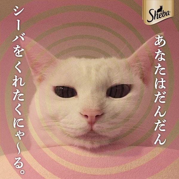 催眠術師のような目ヂカラのある猫