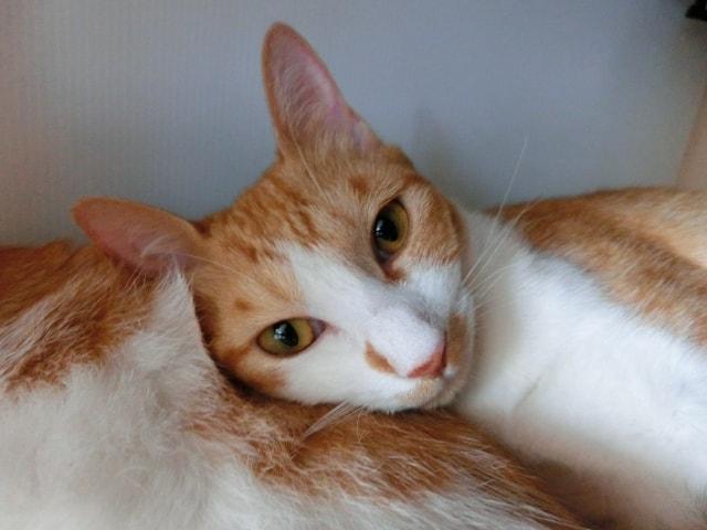 人間を魅了する猫のイメージ写真