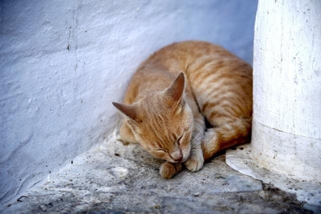 サントリーニ島でシエスタ(お昼寝)する猫のイメージ写真