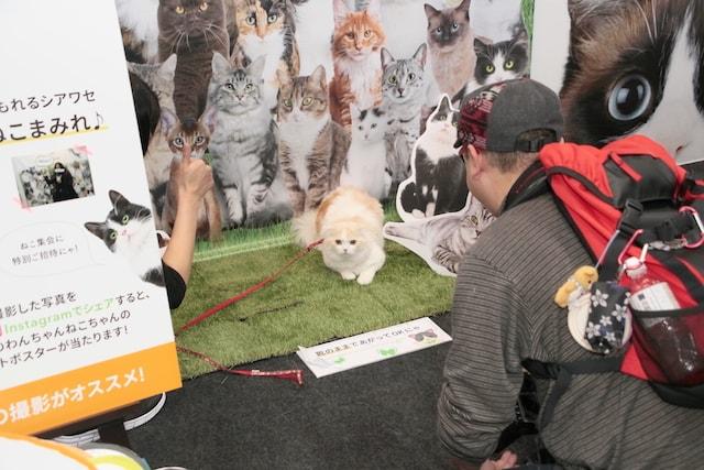 インターペットの猫ゾーン