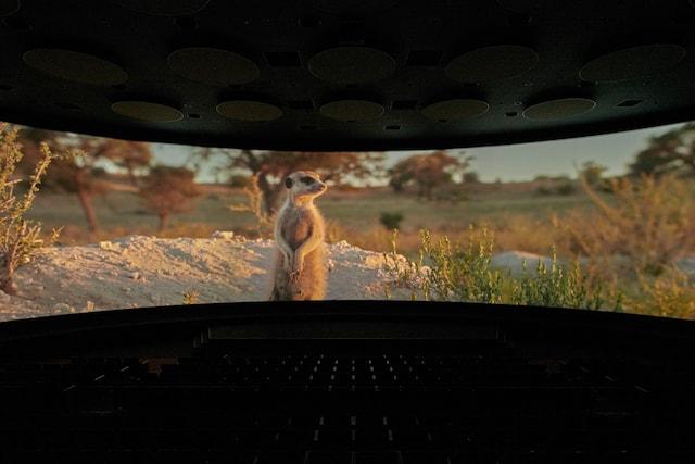 Orbi Yokohama(オービィ横浜)のシアターで上映される「THE MEERKATS(ザ・ミーアキャット)」
