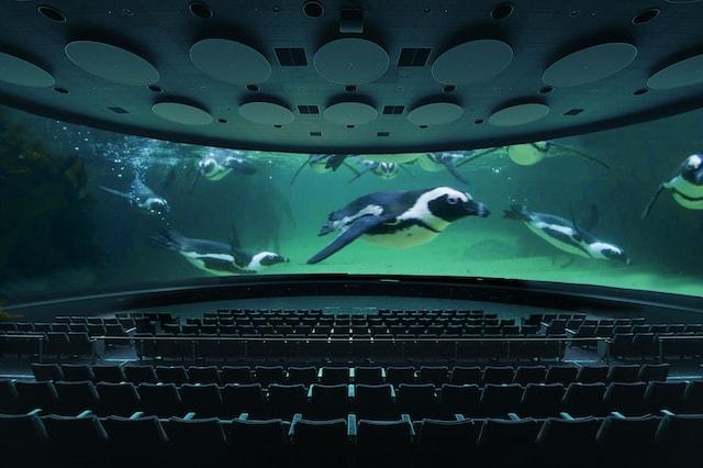 Orbi Yokohama(オービィ横浜)のシアターで上映される「はらぺこペンギン・マックス