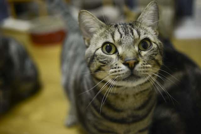 NPO法人「ねこけん」による保護猫の譲渡会