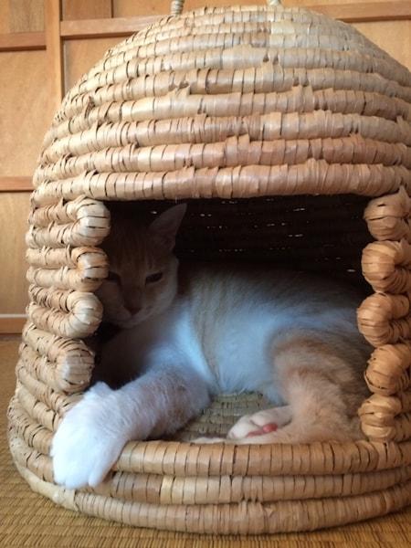 猫ちぐらでくつろぐ猫のイメージ写真