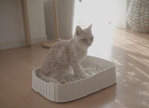 「クリーンケア おそうじ不要使い捨てトイレ」でオシッコをする猫