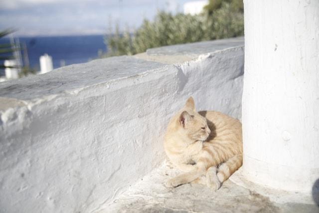ギリシャ・サントリーニ島でまどろむ猫のイメージ写真