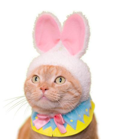 イースターバニーの猫用かぶりもの、ホワイトカラー