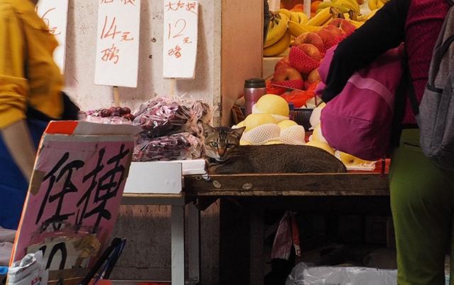 市場に紛れる猫(拡大写真)