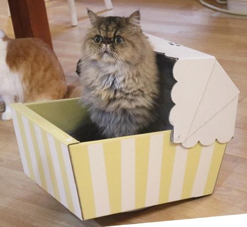 ダンボール猫ベッド「ねこちぐら」の中でびっくりする猫