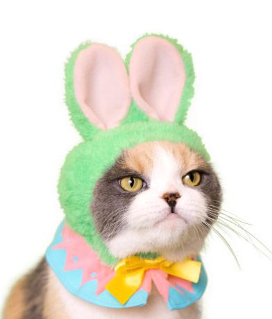 イースターバニーの猫用かぶりもの、グリーンカラー