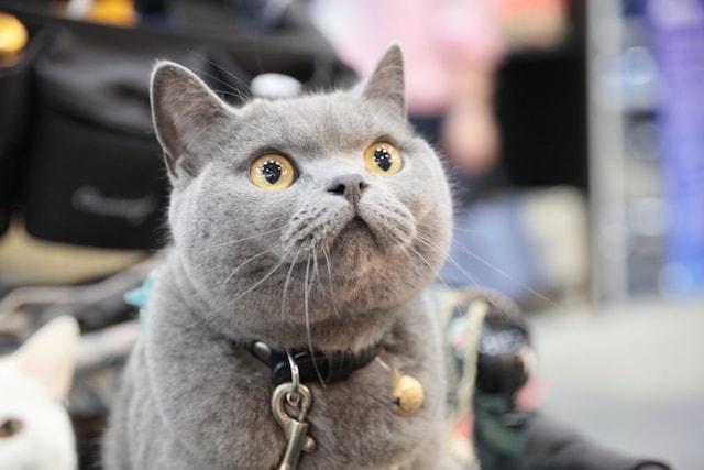 インターペットに訪れた猫