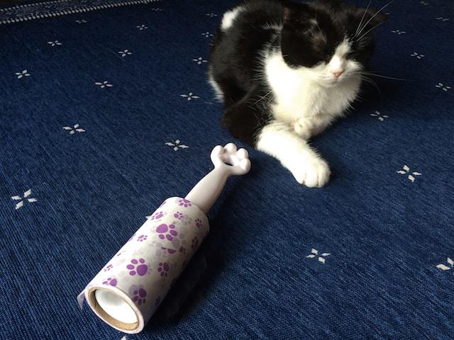 猫の手型のコロコロの側にたたずむ猫